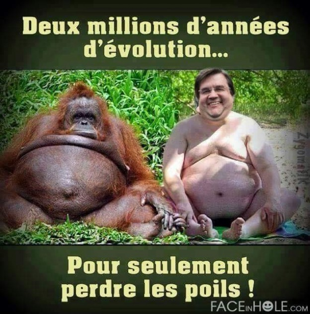 poil animaux humains evolution espece